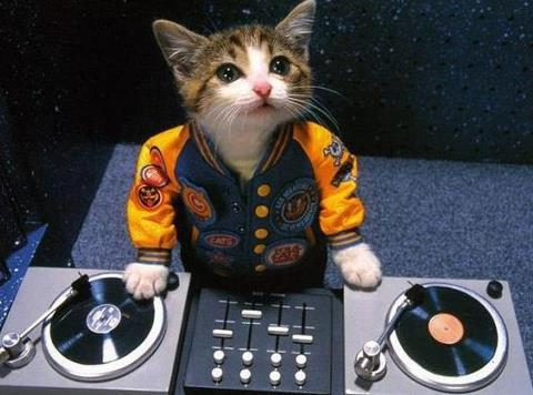 DJ-Cat-In-The-House...
